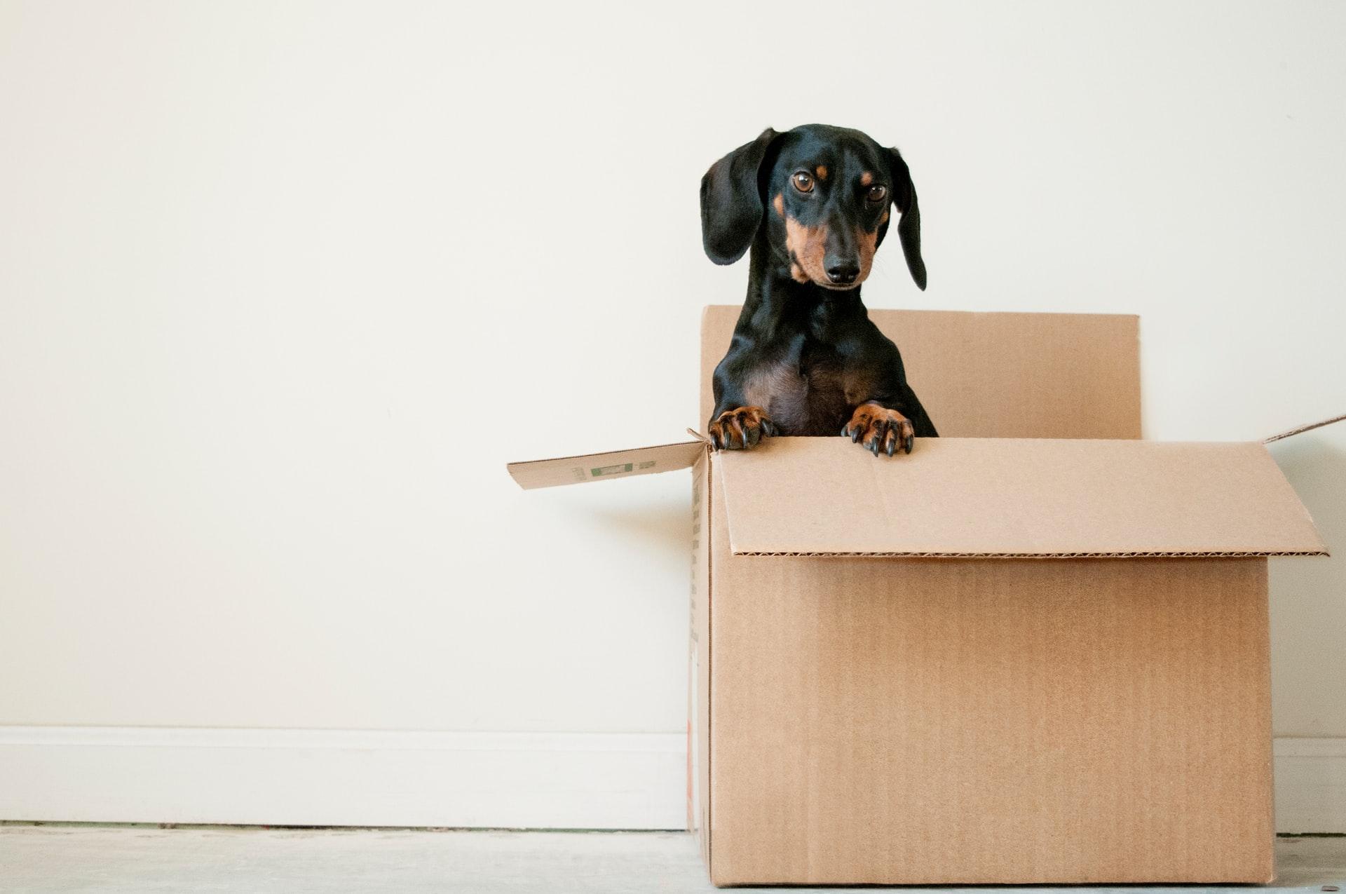 verhuisdoos hond